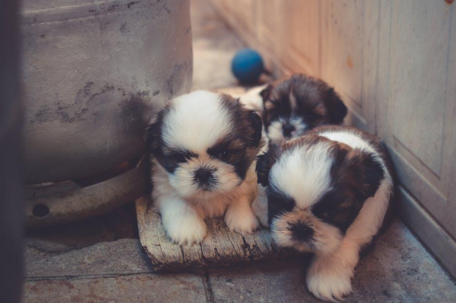animal photography, backyard, dog