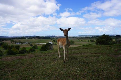 Free stock photo of Beautiful animal, beautiful landscape, brown deer