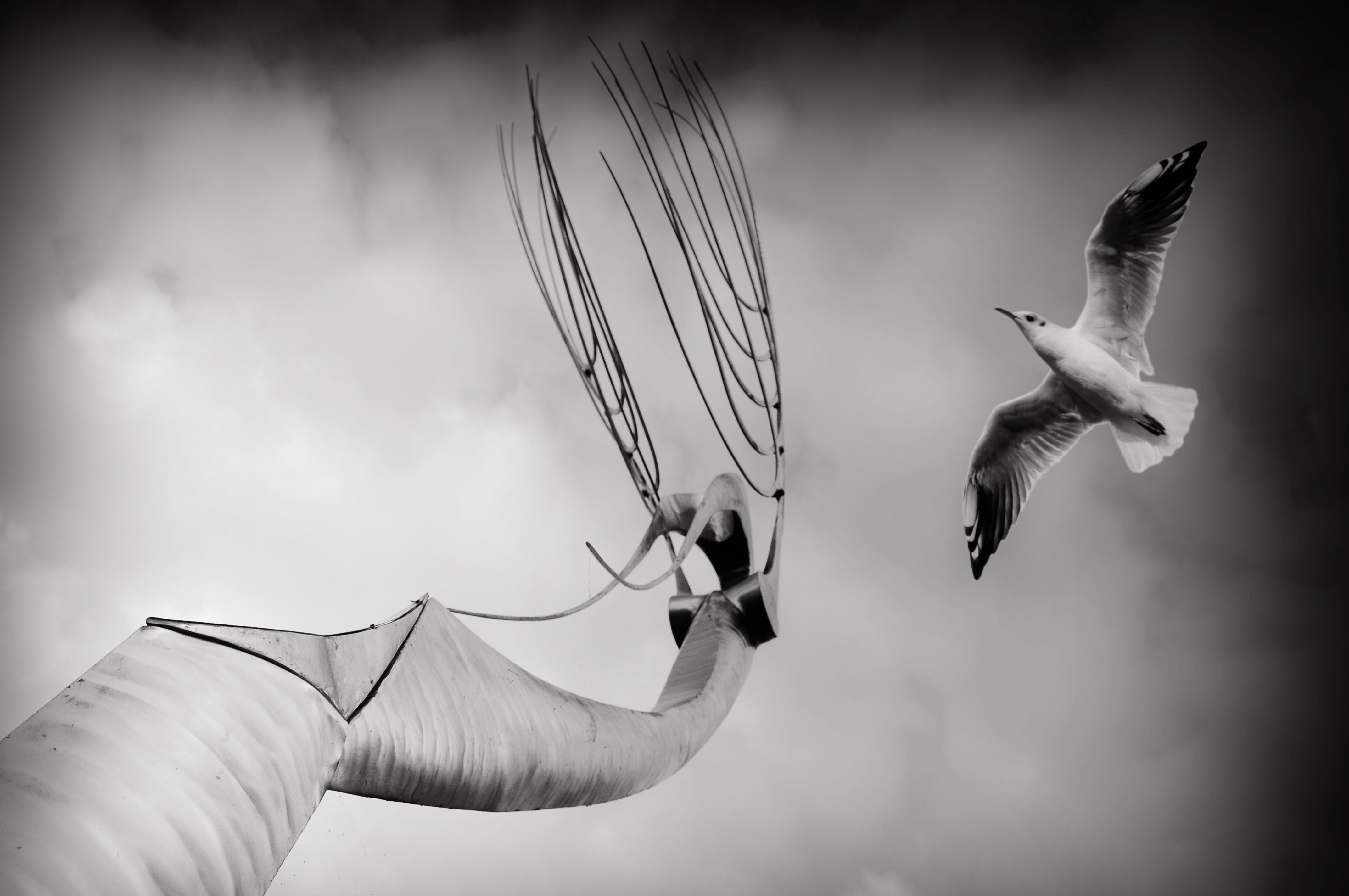 Grayscale Photography of Seagull