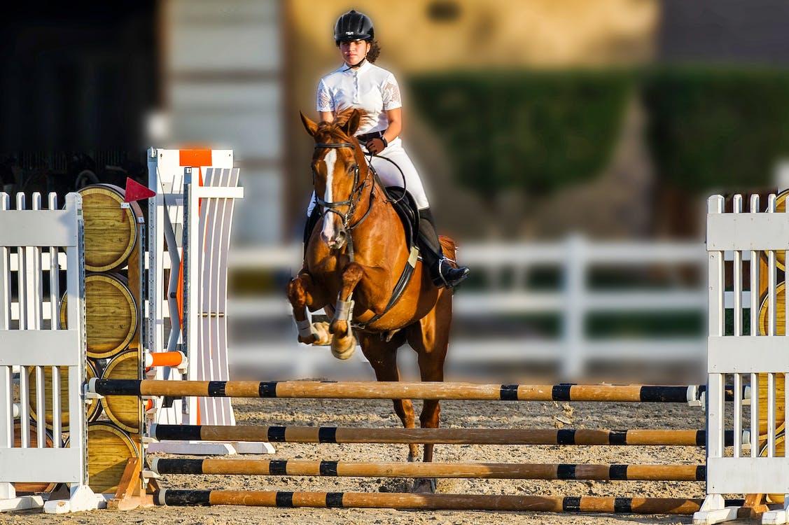 equestrian, horse jump, horse rider