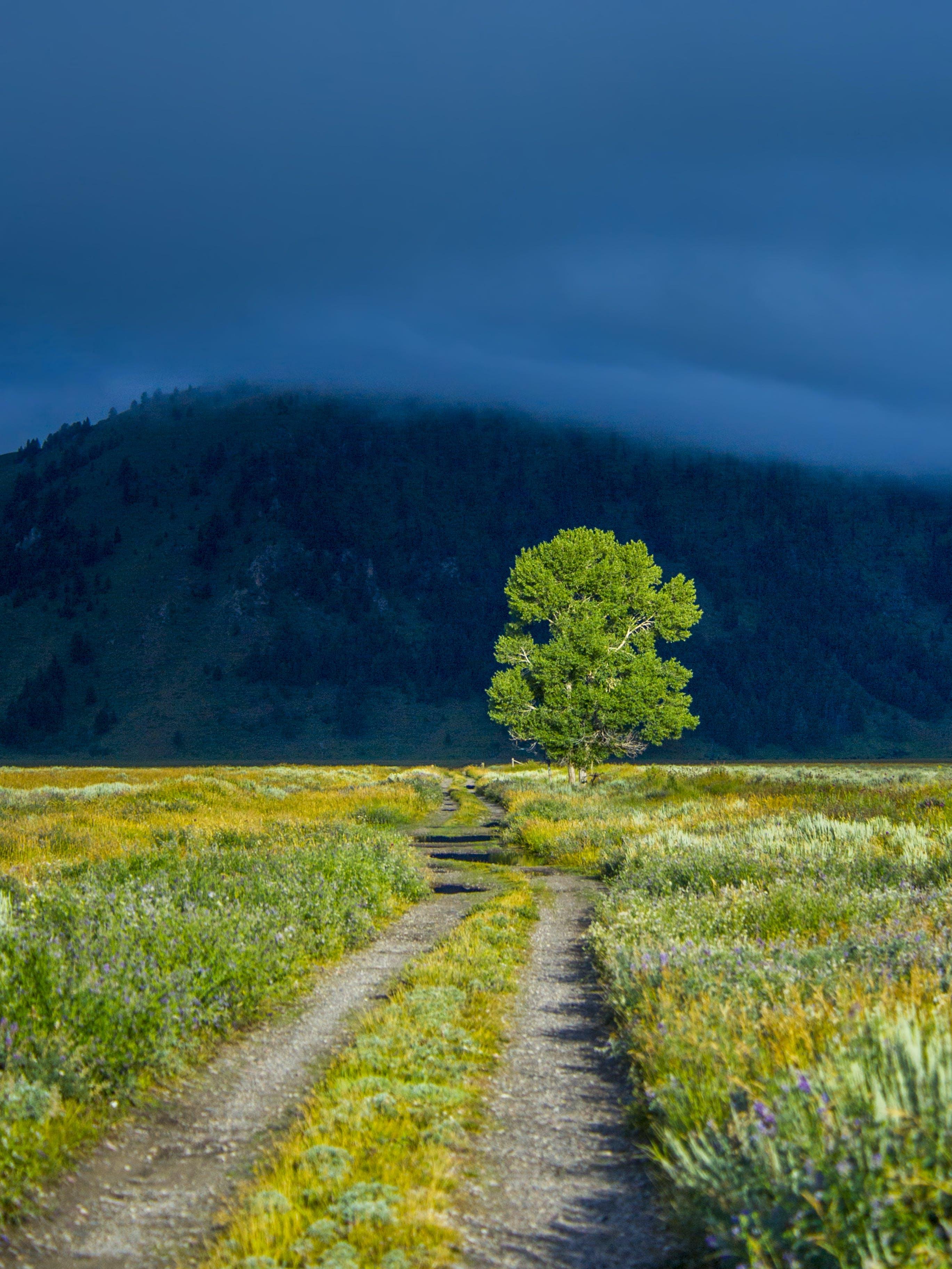 Fotobanka sbezplatnými fotkami na tému cesta, denné svetlo, hmla, hora