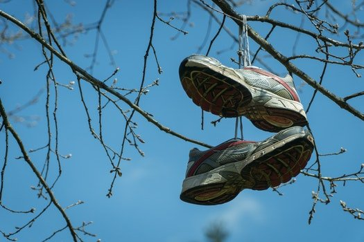 Free stock photo of sky, flowers, branches, shoes