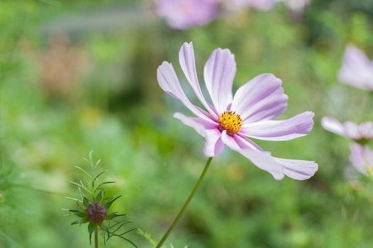 Purple and Yellow 8 Petal Flower