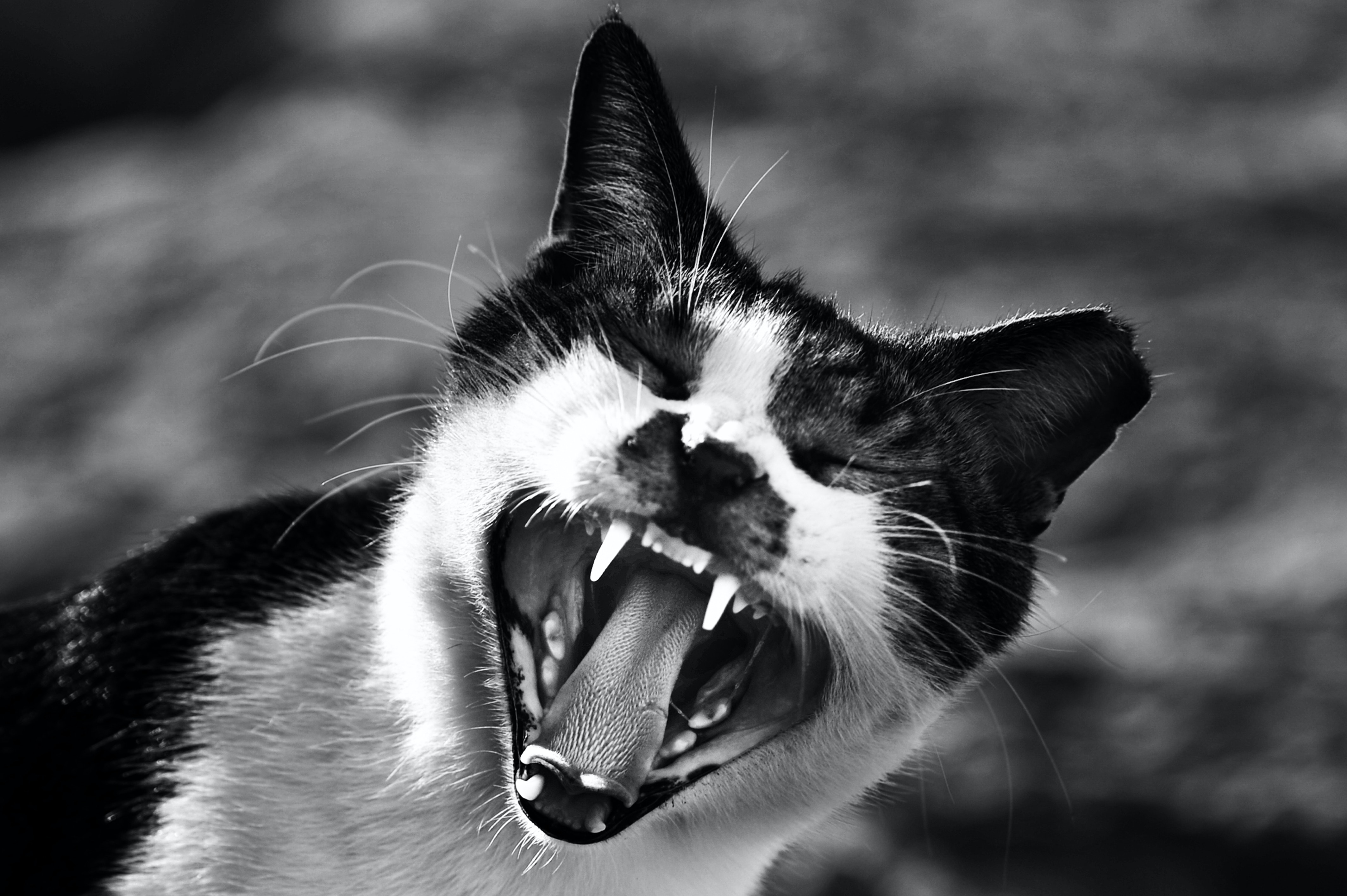Angry Animals Google Search: 500+ Beautiful Angry Face Photos · Pexels · Free Stock Photos