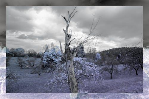Ilmainen kuvapankkikuva tunnisteilla ir, käänteinen väri, kehys, kentät