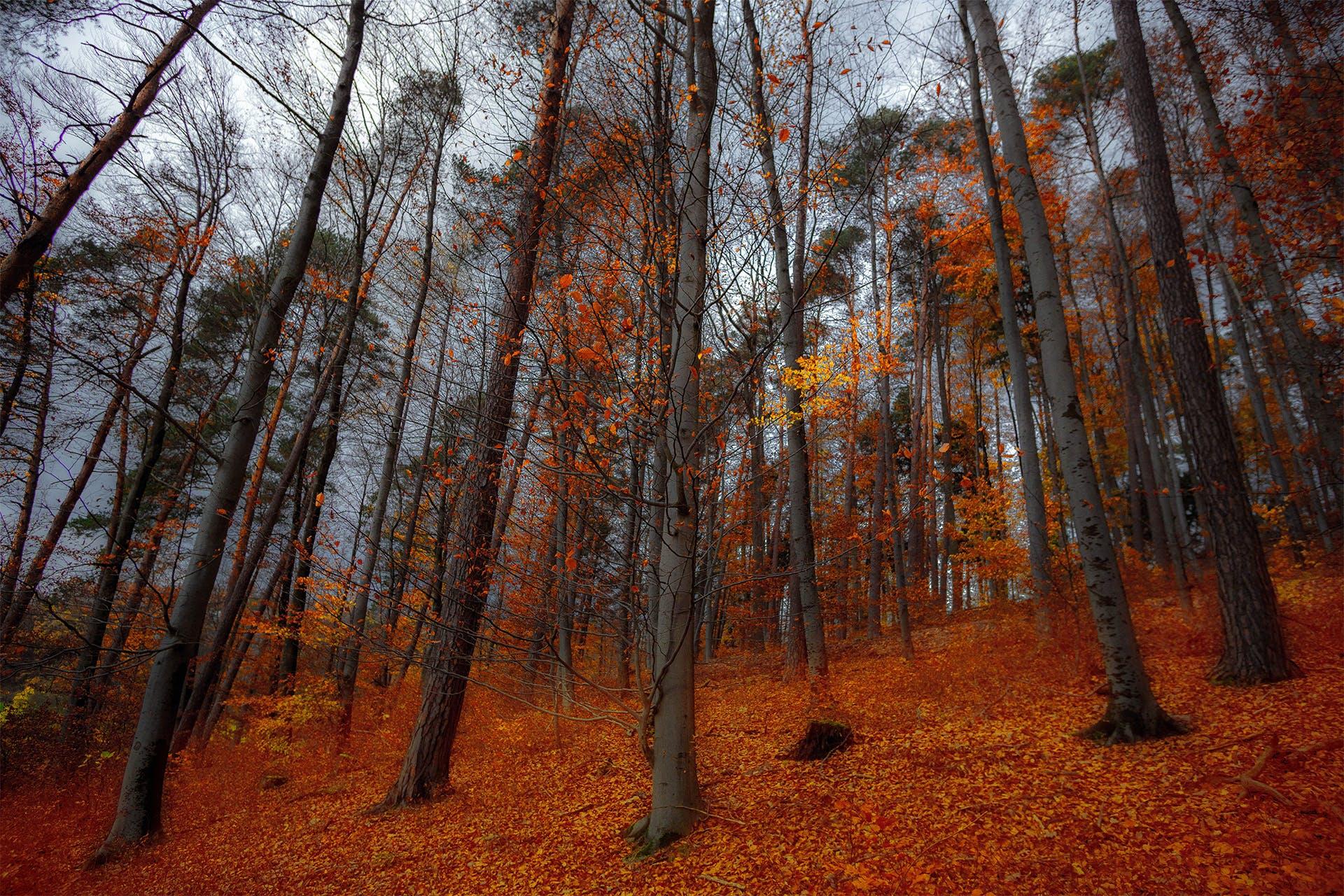 Kostenloses Stock Foto zu aufnahme von unten, bäume, baumstämme, beratung