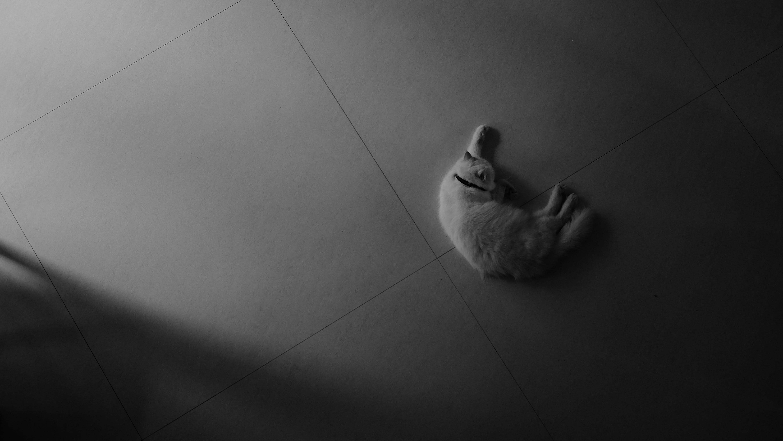 Foto d'estoc gratuïta de animal, arquitectònic, blanc i negre, felí