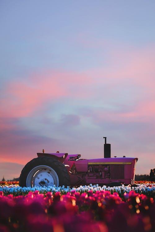 bakgrundsbelyst, blommor, bondgård