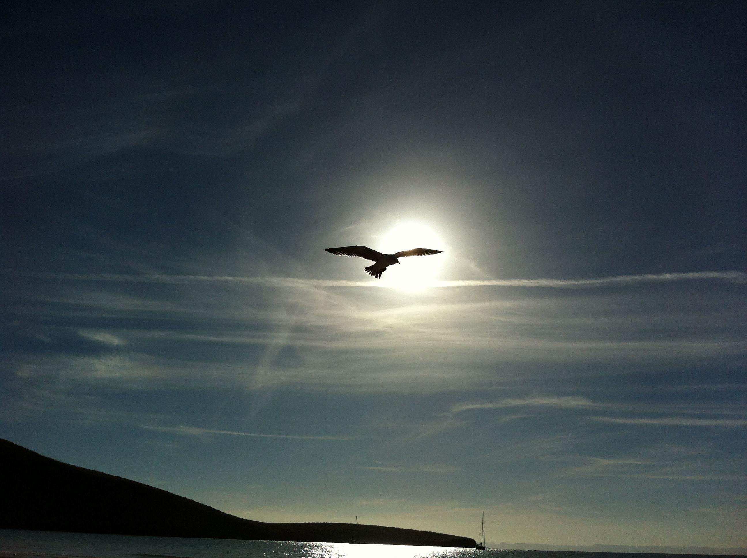 Kostenloses Stock Foto zu meer, himmel, vogel, fliegen