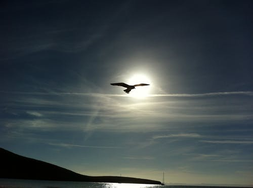 คลังภาพถ่ายฟรี ของ การบิน, ชายหาด, ซิลูเอตต์, ดวงอาทิตย์