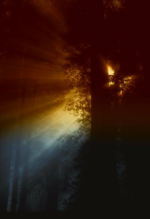Sonnenstrahl Fließt In Bäumen