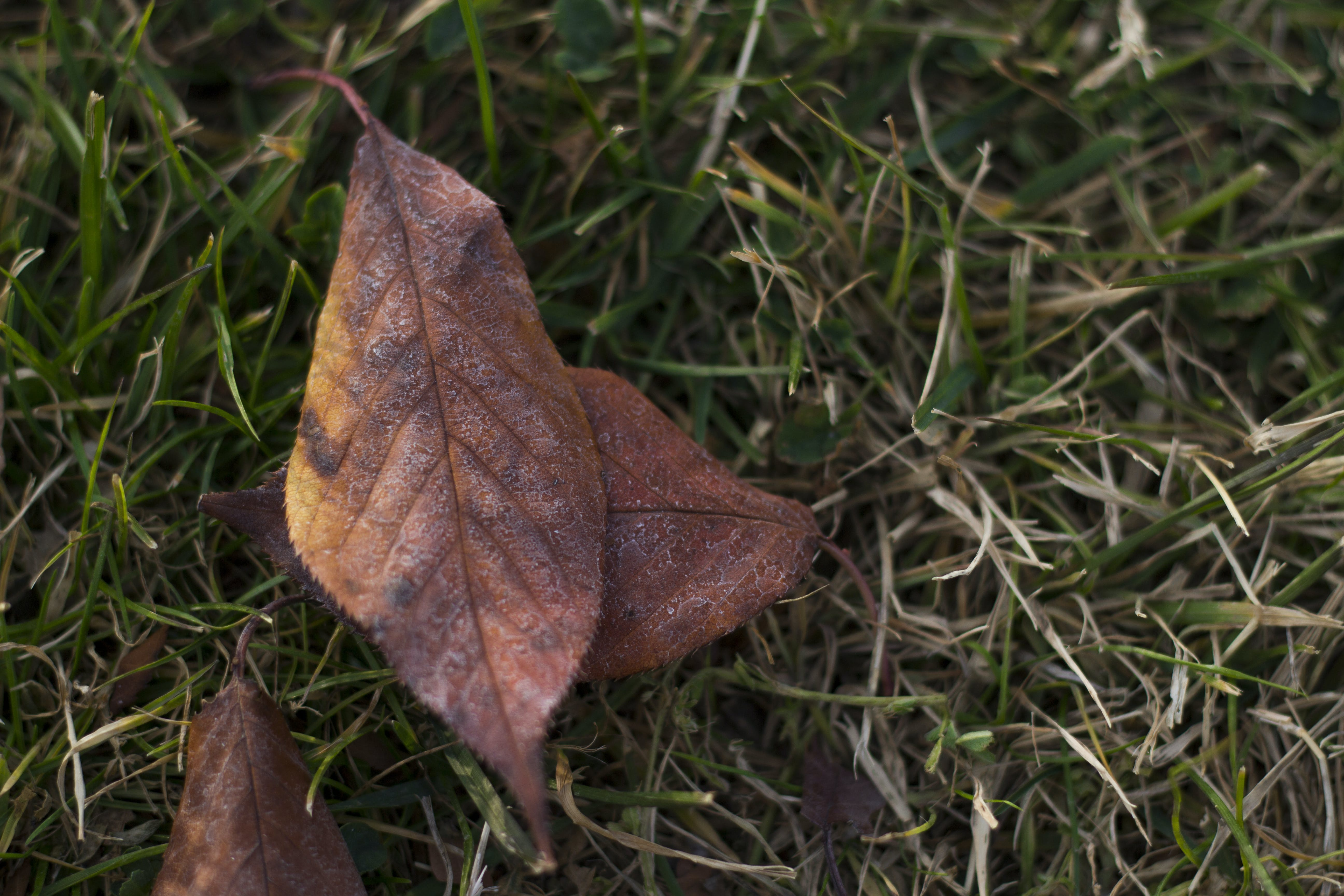 Free stock photo of autumn leaves, grass, leaves