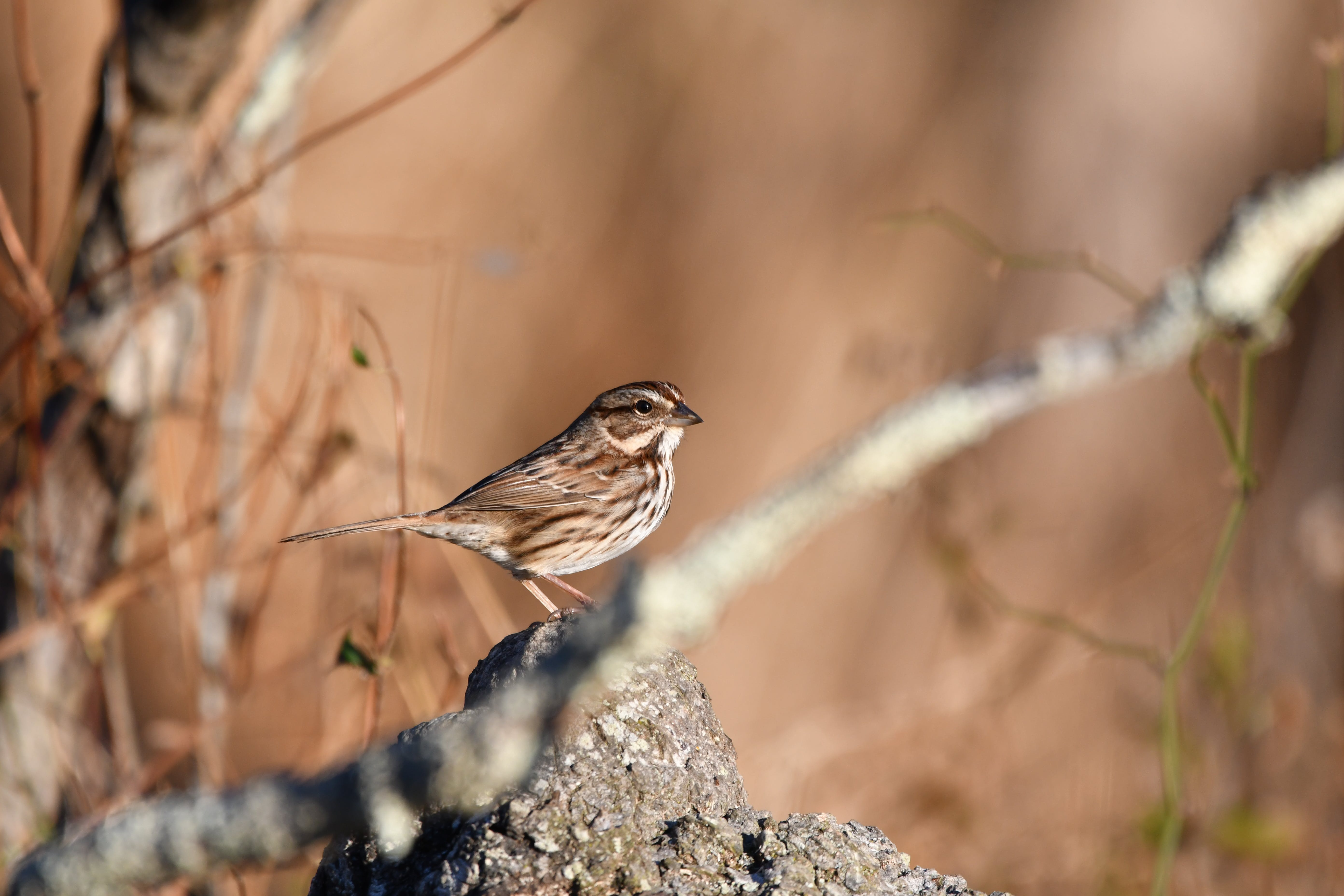 Ingyenes stockfotó állat, madártoll, napfény, vadvilág témában