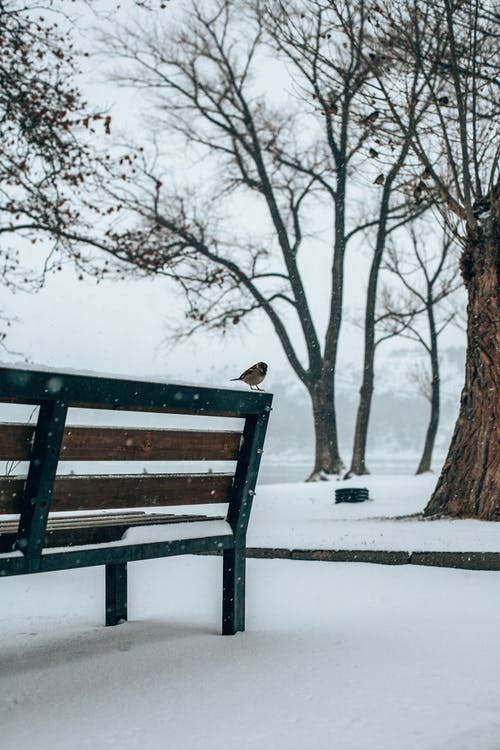 Wooden bench covered with snow in winter park