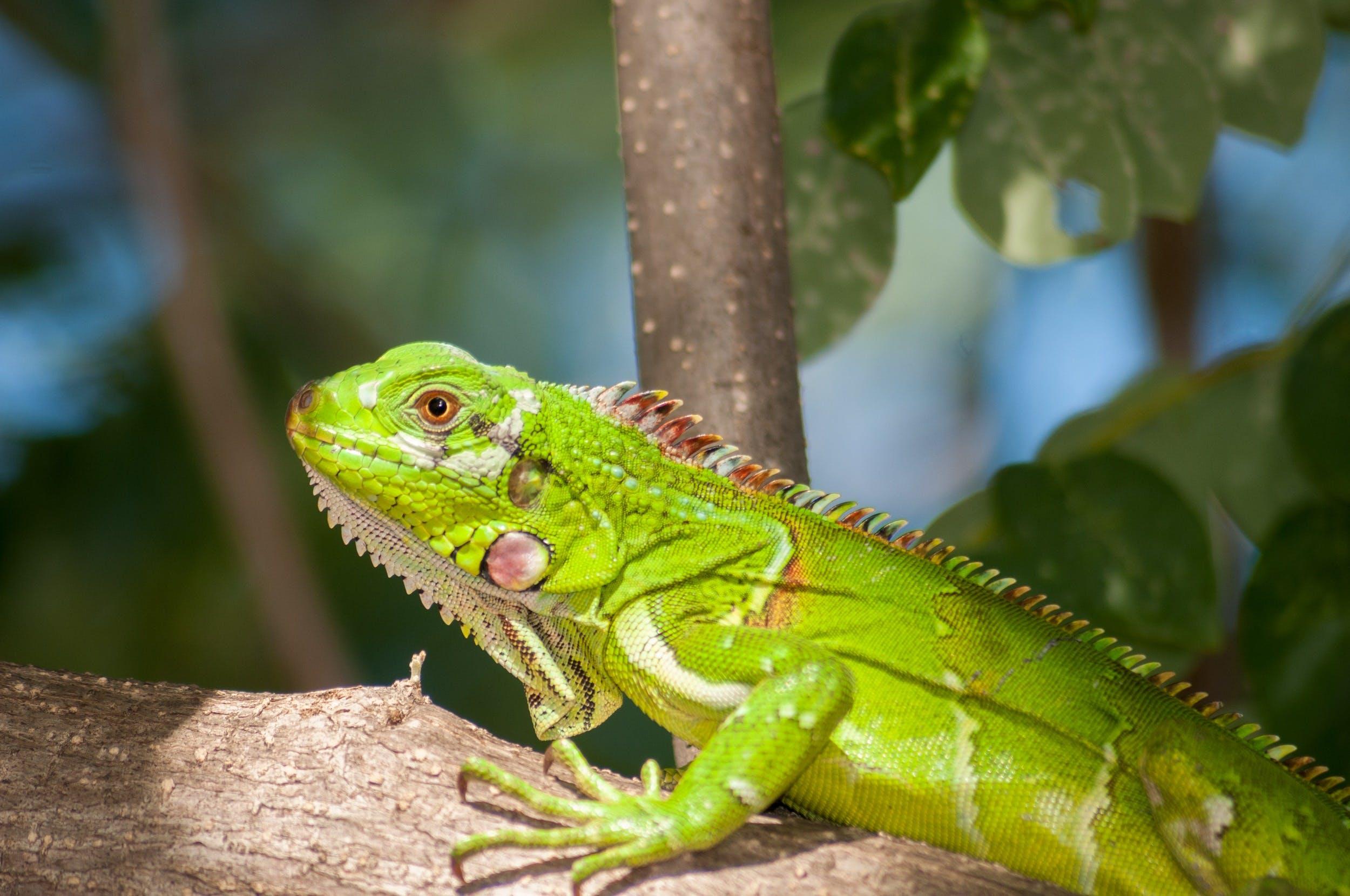 Green Reptile on Brown Tree