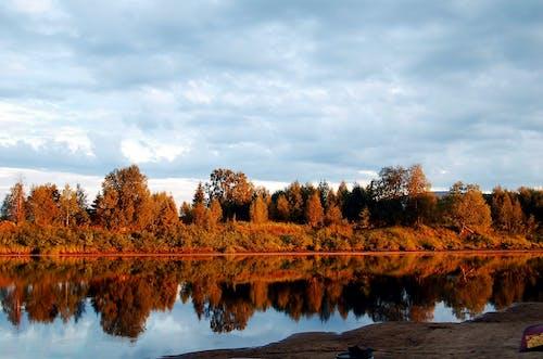 Безкоштовне стокове фото на тему «відображення, вода, дерева, ліс»