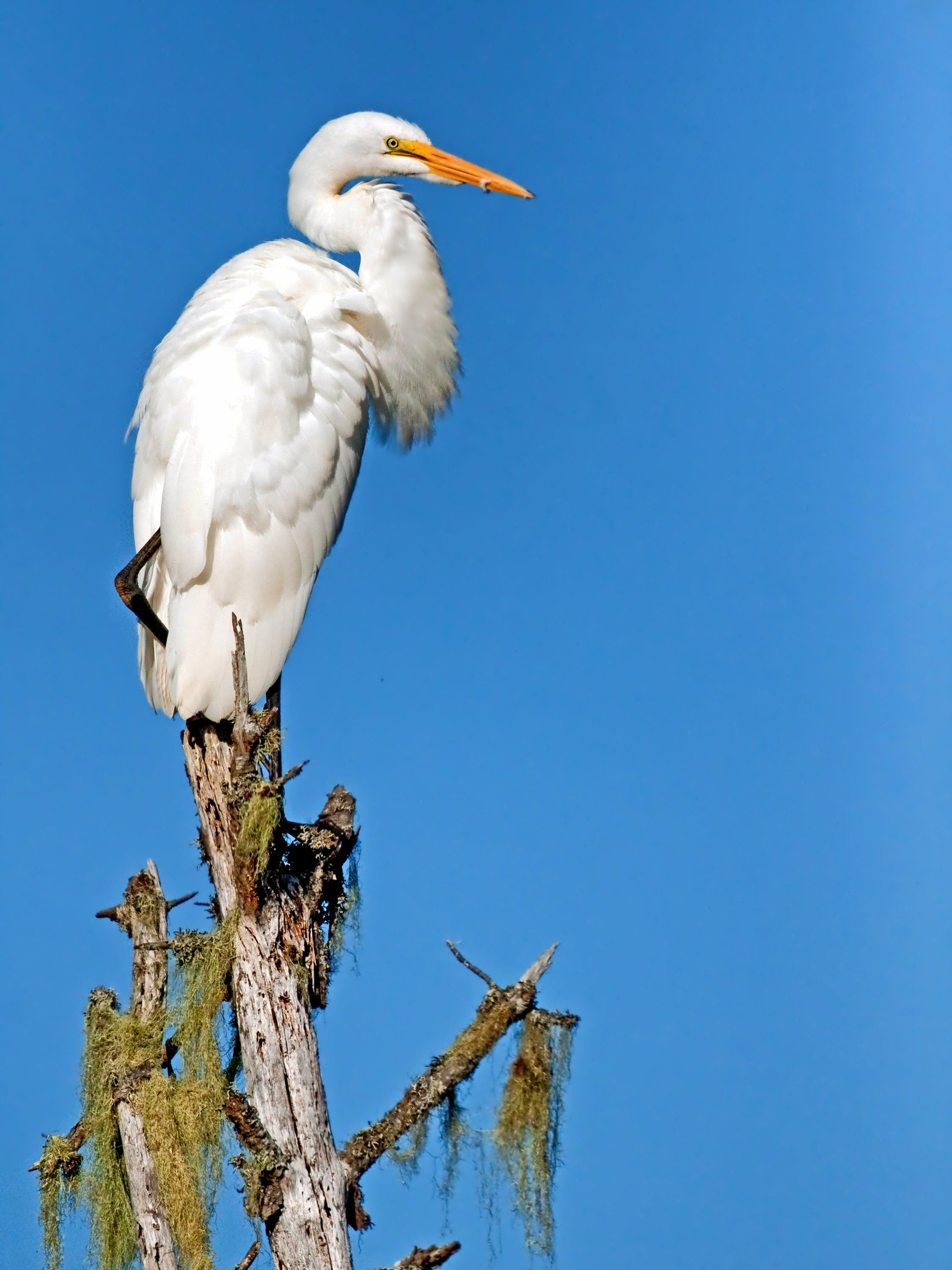 White Bird Perching on Brown Tree Trunk during Daytime