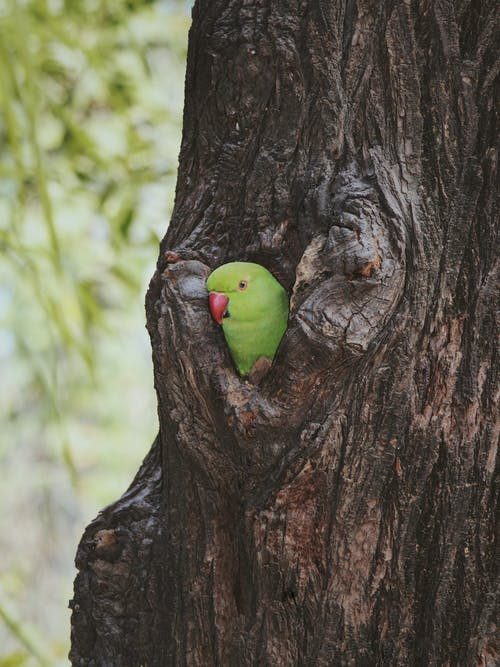 Green Bird on Brown Tree Trunk