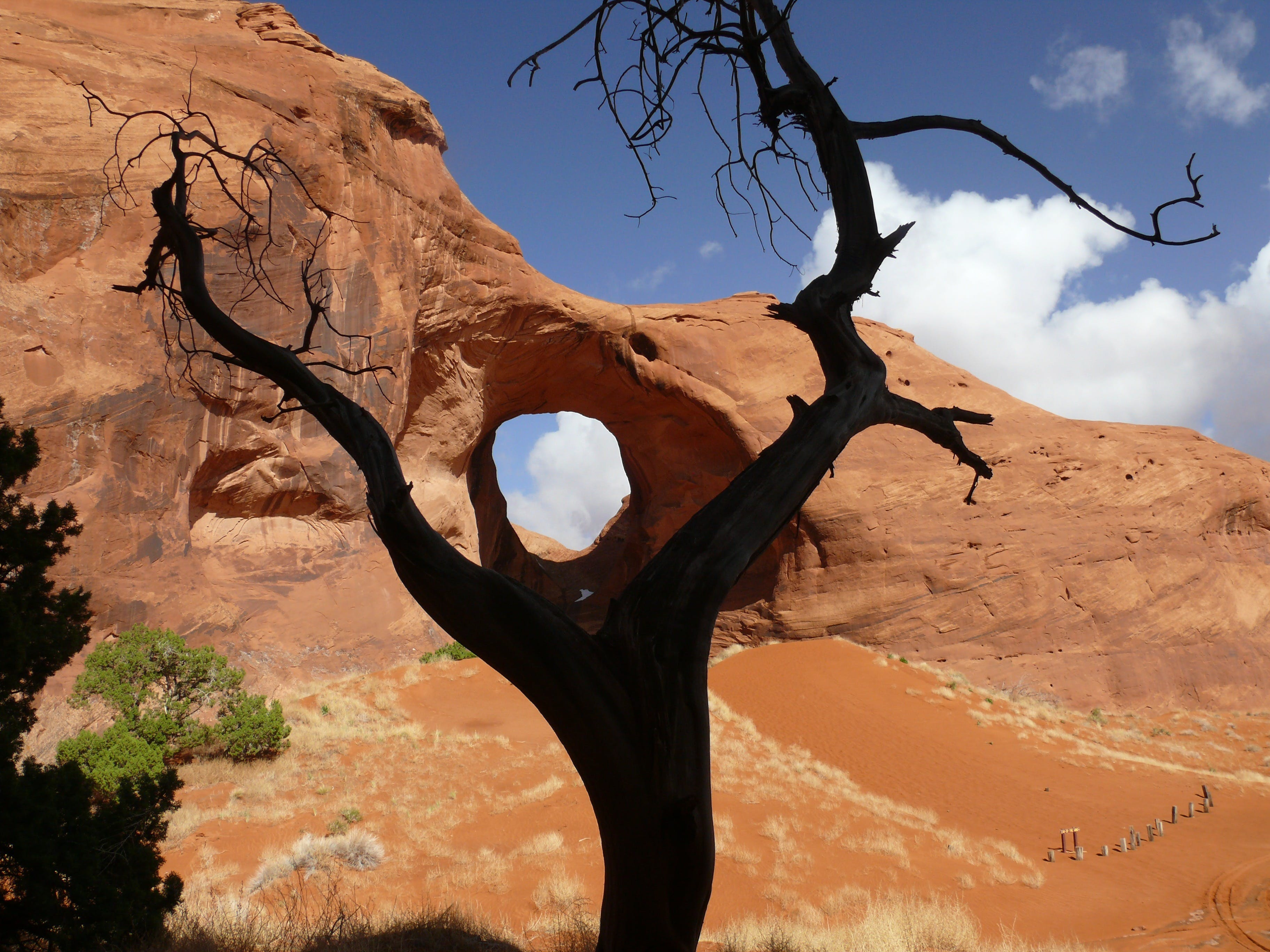 Black Bare Tree on the Brown Dessert Under Blue and White Sky