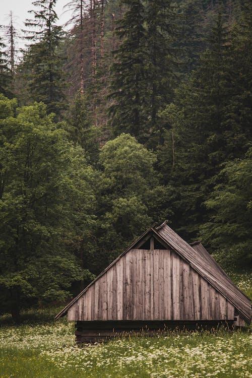 Photos gratuites de arbre, arbuste, bâtiment