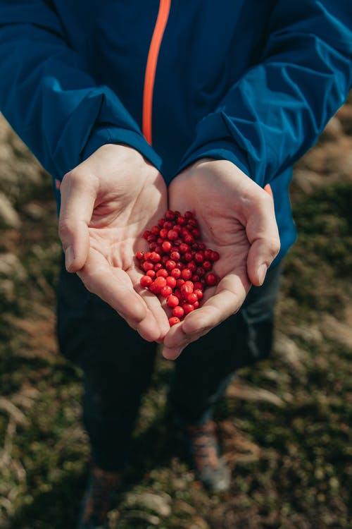 Person Holding Red Round Fruits