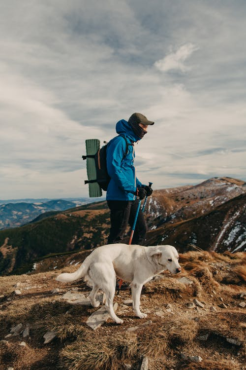 Side view of unrecognizable young male backpacker in warm clothes ascending on rough rocky mountain with trekking poles during hiking trip with adorable Labrador Retriever dog