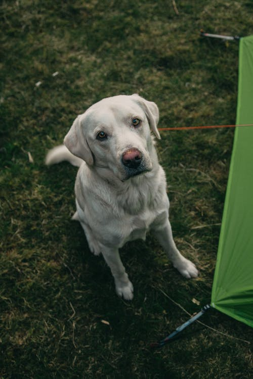 Fotos de stock gratuitas de acampada, acampar, al aire libre