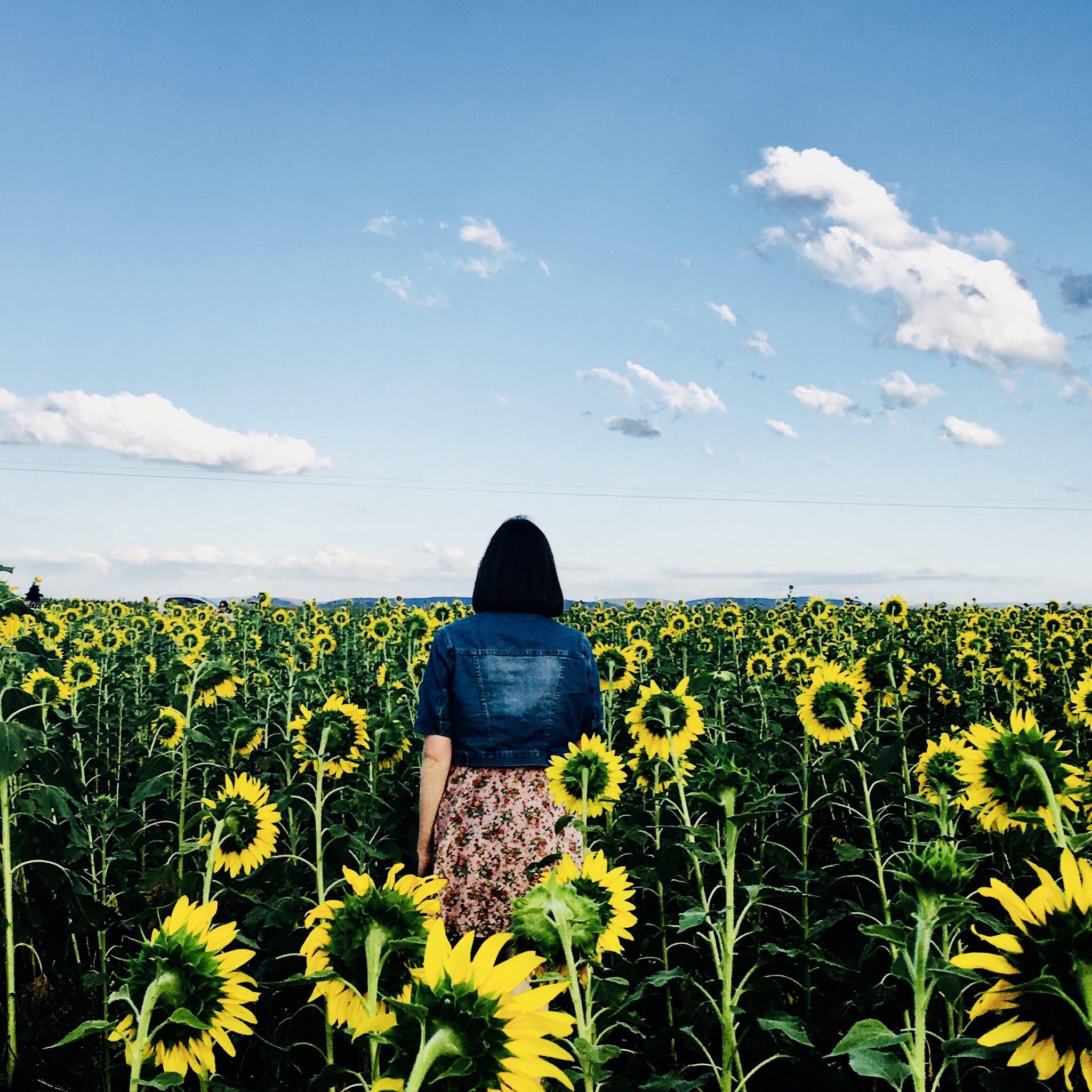 向日葵, 增長, 夏天, 天性 的 免费素材照片