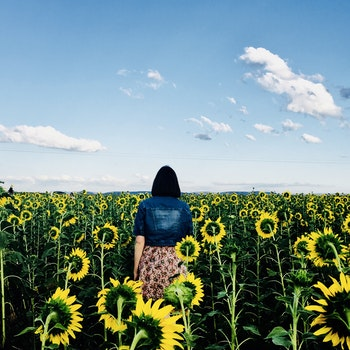 Woman Walking in Bed of Sunflowers