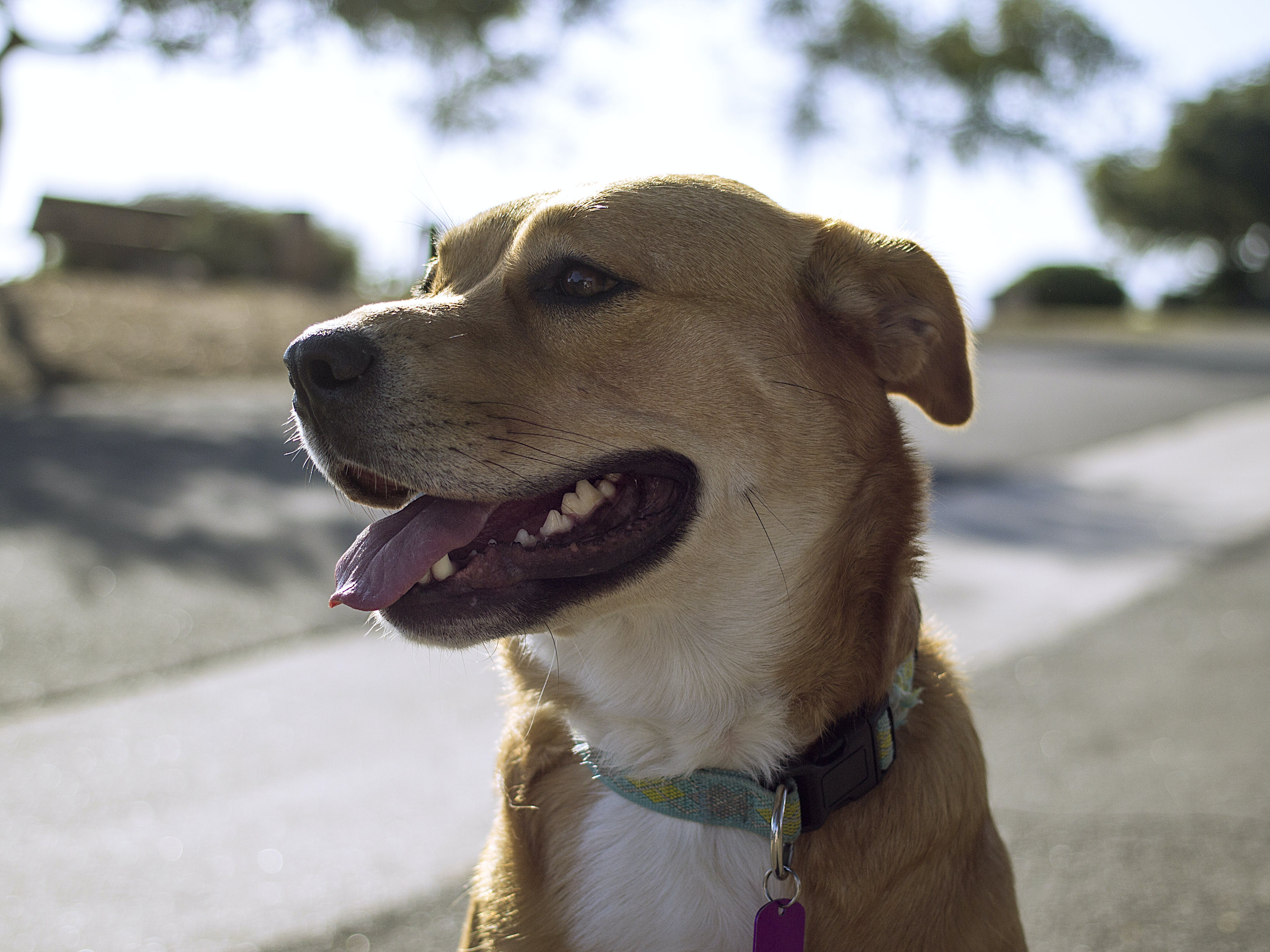Close-up Photography of Brown and White Dog