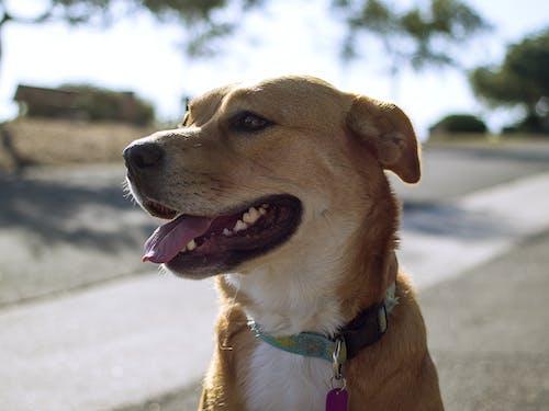 Foto d'estoc gratuïta de animal, gos, mascota