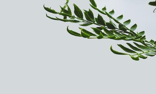 Free stock photo of dark green, dark green leaves, dark green plants