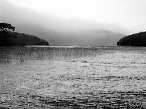 Immagine gratuita di ambiente, bellezza della natura, bianco e nero