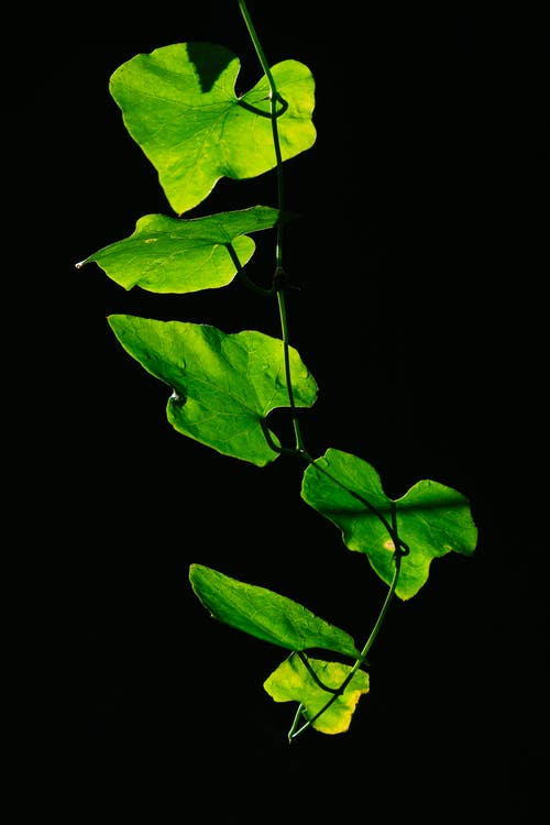 คลังภาพถ่ายฟรี ของ กลางแจ้ง, ธรรมชาติ, พฤกษา, พืช