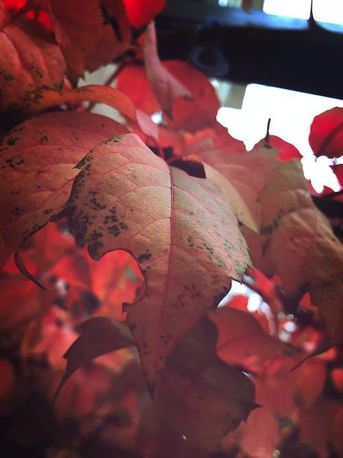 açık, kuru yaprak, renk içeren Ücretsiz stok fotoğraf
