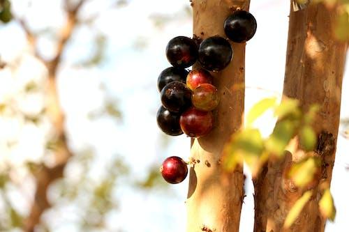 Ảnh lưu trữ miễn phí về cây, đen, Hoa quả tươi