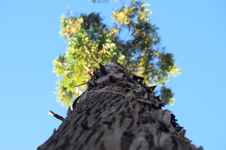 Free stock photo of nature, tree bark, trees
