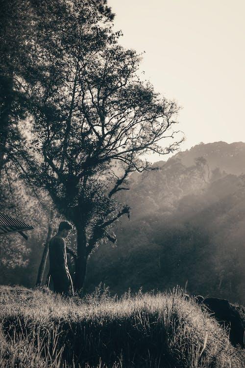 Free stock photo of batman, blurred background, dramatic, garden