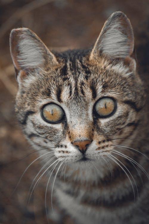 Cute striped cat with attentive gaze