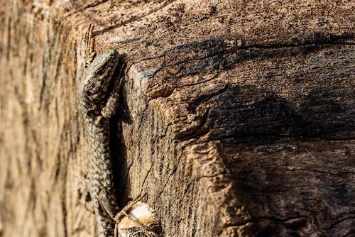 Photos gratuites de aboiement, animal, arbre