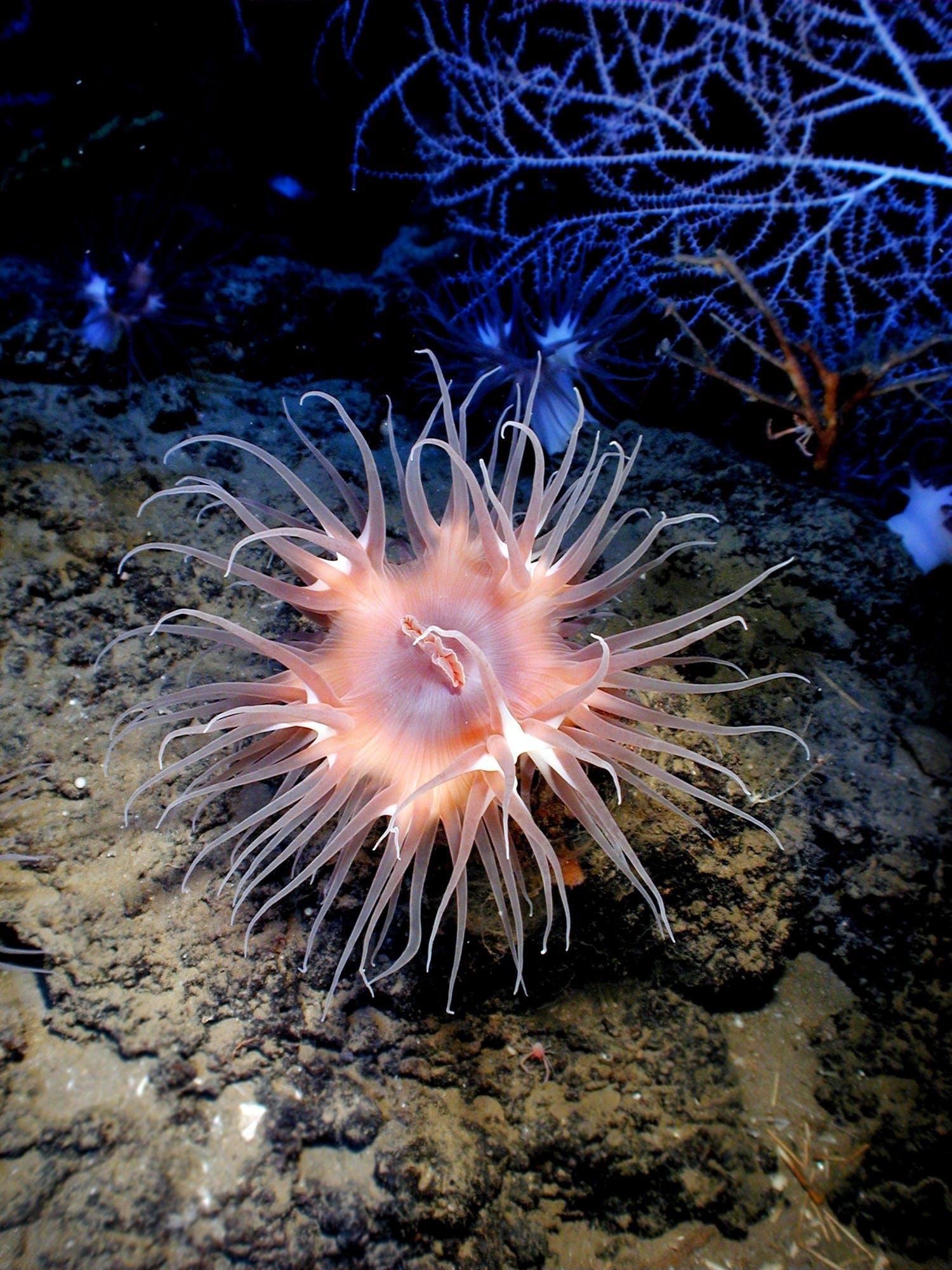 Pink Sea Creature Underwater
