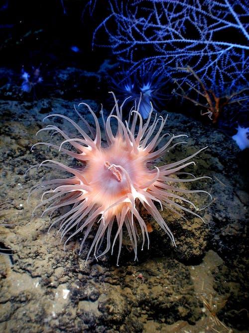 Fotobanka sbezplatnými fotkami na tému more, oceán, pod vodou, voda