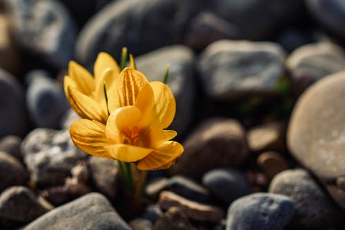 Bright blossoming flowers with gentle petals growing among rough stones in sunlight on blurred background