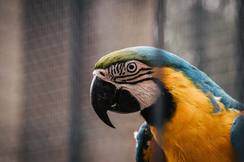 Selective Focus Photo of Macaw Parrot with a Black Beak