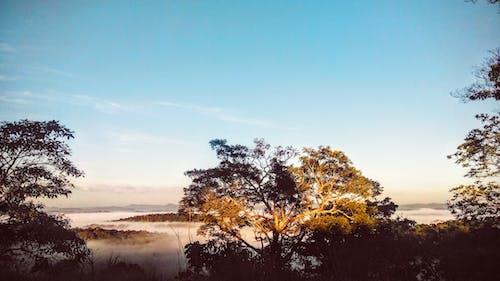 Gratis lagerfoto af natur, sky, træ