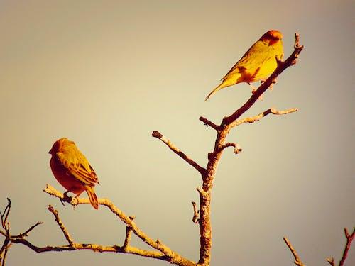 Gratis lagerfoto af gul, natur, nuttet, Smuk