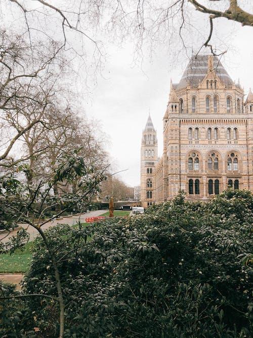 倫敦, 光秃秃的, 南肯辛顿 的 免费素材图片