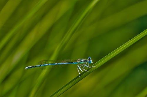 Бесплатное стоковое фото с максросъемка, насекомое, природа, равнокрылая стрекоза