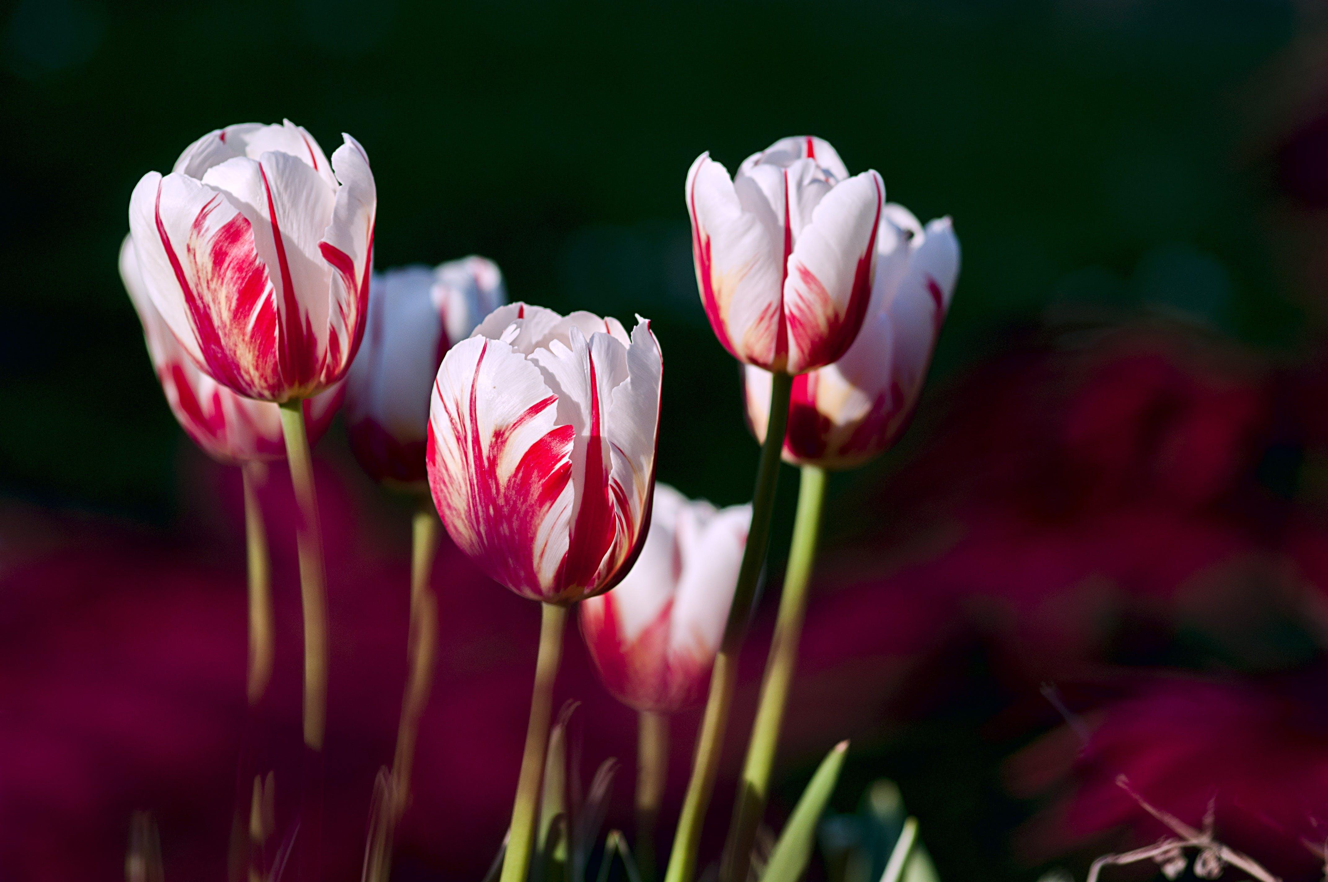 꽃, 식물군, 자연의 무료 스톡 사진