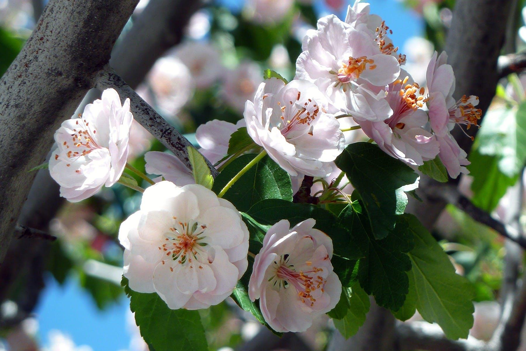 Foto stok gratis berkembang, bunga-bunga, flora, makro